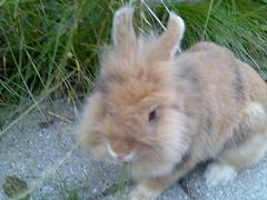 En dejlig kanin