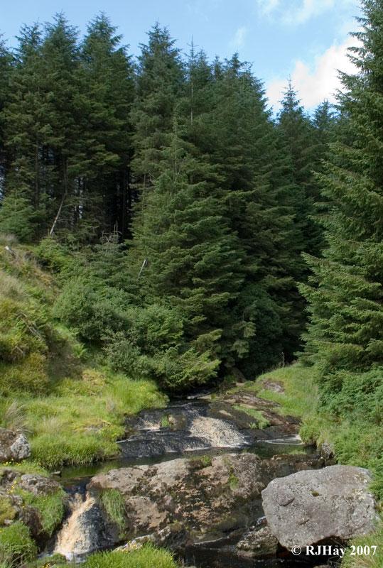 Woodland stream - Glendun