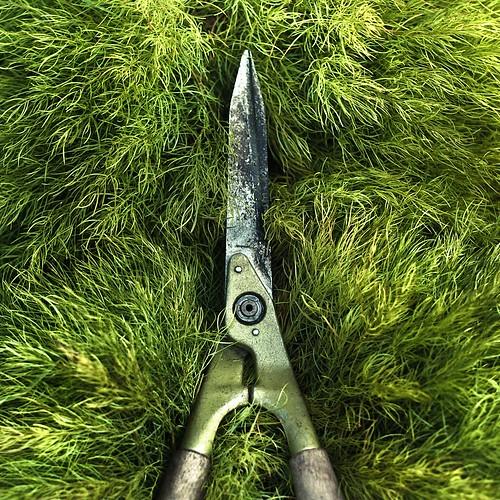 Garden Grass Texture por ►CubaGallery