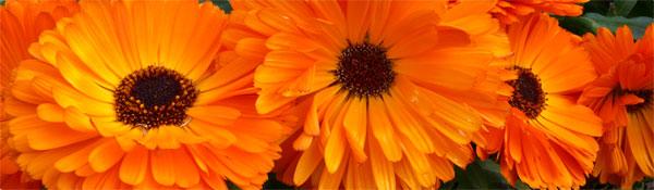 O-Flowers