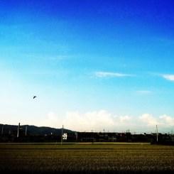 空を飛ぶ鳥のように、おは!