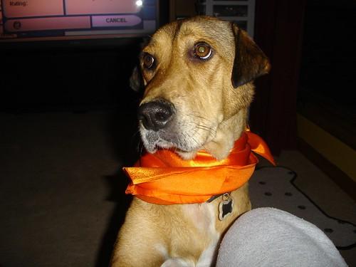 Halloween 2006 - Murfy by you.