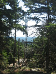 Cell Tower View