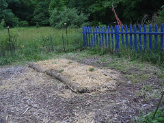 okra and squash bed done