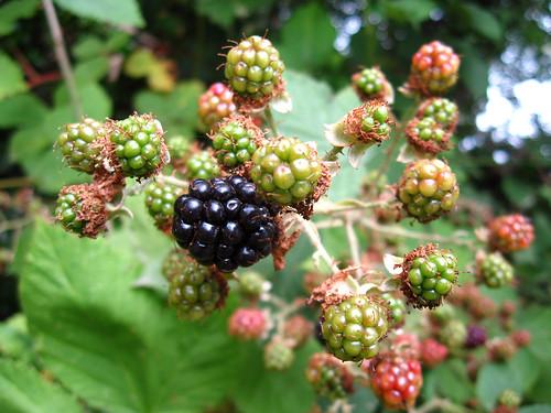 A few ripe ones.