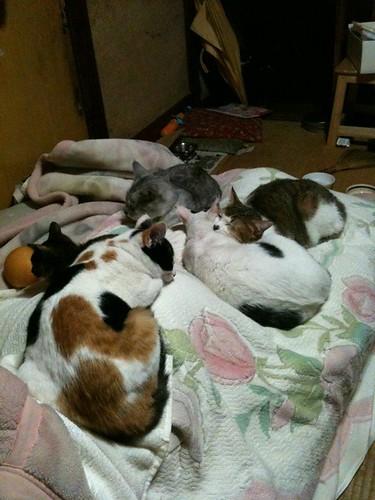 梨と娘と猫五匹