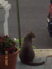 Herman on Porch
