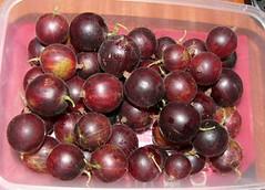 redgooseberries