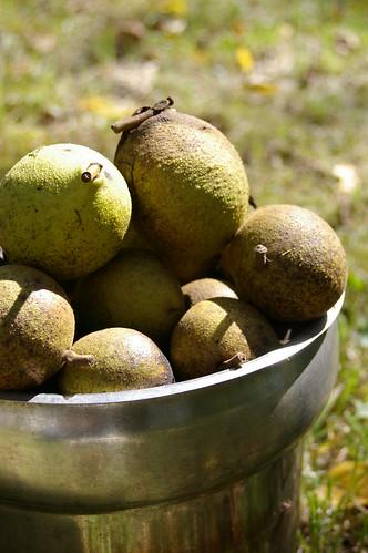 walnuts in a bucket 3
