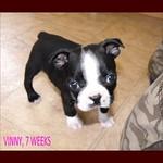 VINNY 7 weeks