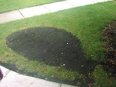 rain garden - just starting