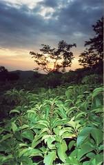 Sunset at Dajipur