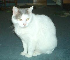 Bajoe the cat
