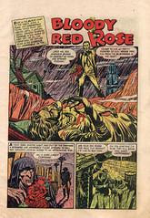 red rose 001