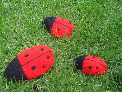 Ladybird family