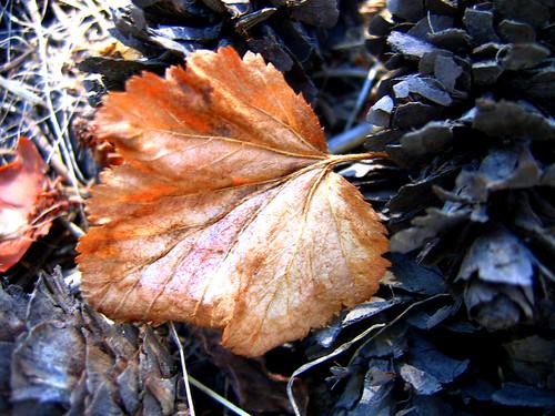9-3-leaf