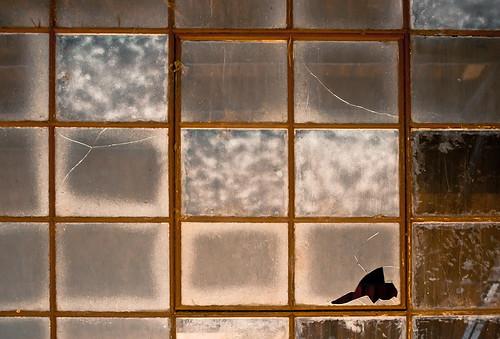 Cracked,Frosty n' Smoked Window
