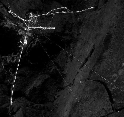 07-7-9-spiderweb