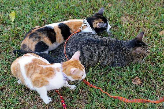 YUAN: 母貓結紮全紀錄