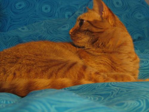 Orange Cat & Blue Bed