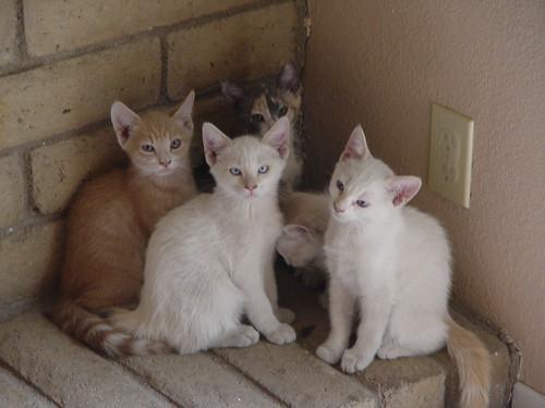 Kittens in the corner.