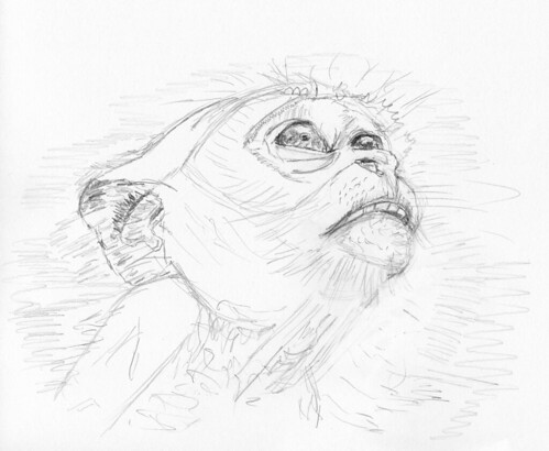 Cynomolgus Monkey 1-d