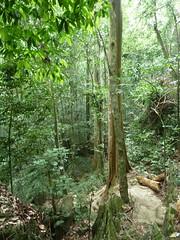 Parque Nacional de Cuc Phuong