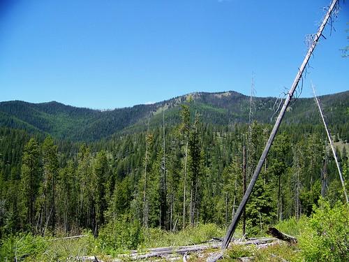 Teepee-Spring Creek roadless area