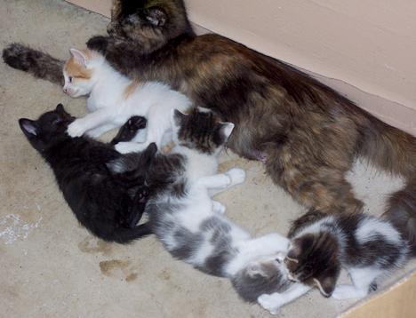 Kitten Free-For-All