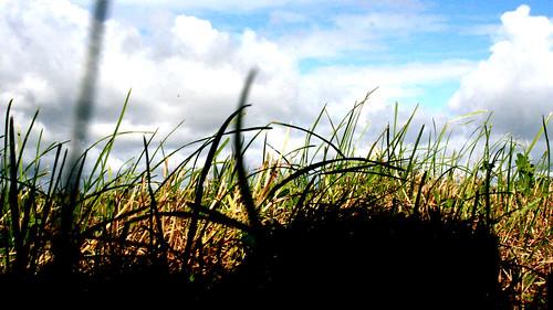 erba by marco marincola