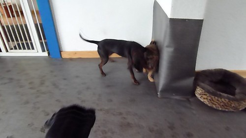 Hunde-Moni 101119 095054 05 por Dosest