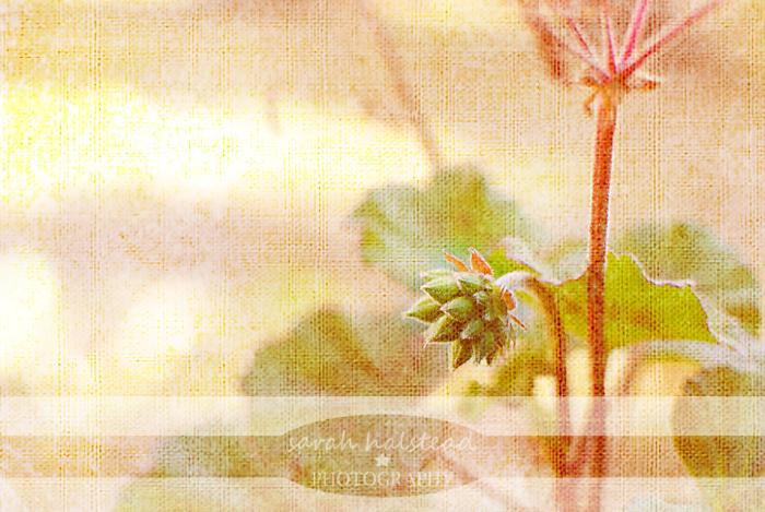 DSC_0362blog