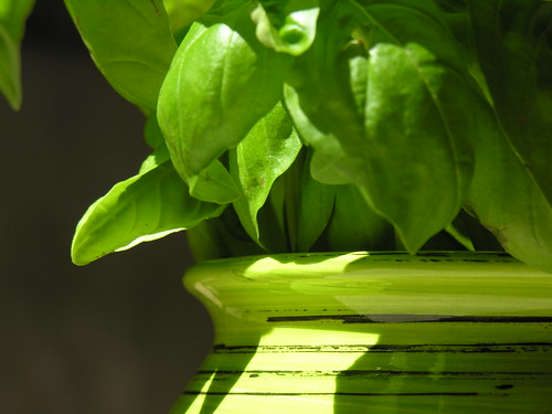 Lezioni di cucina #01 - foto: Andrea Balducci, flickr