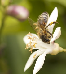 Bee seeks flower for intimate relationship