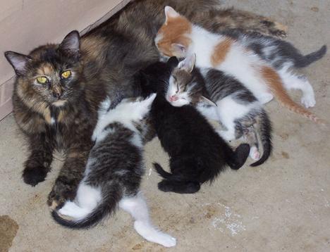 Kiddle & Kittens