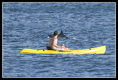 Dolphin Kayak Tours