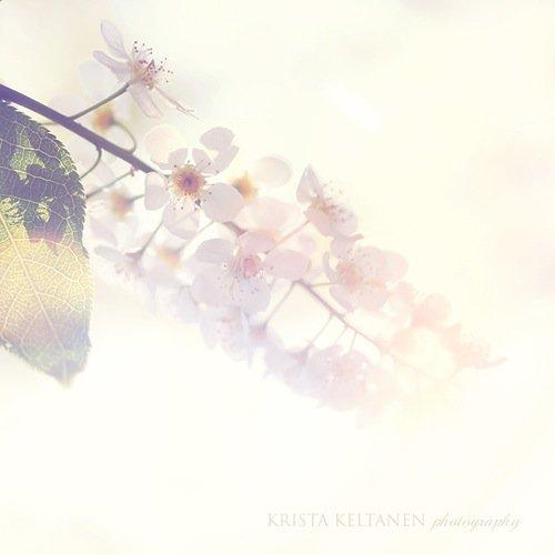 Photographer Krista Keltanen