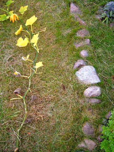 Garden Path?