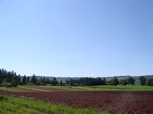 bayberry fields