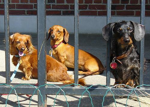 Three doxies, Provincetown, MA