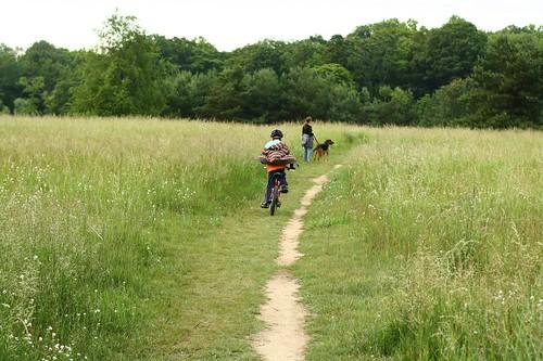 Biking through the Field