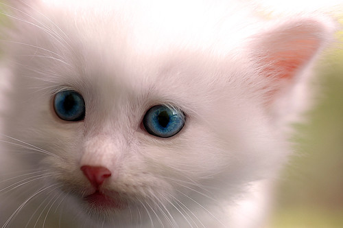 blue-eyed boy by futuna.