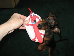 Look at your toy!
