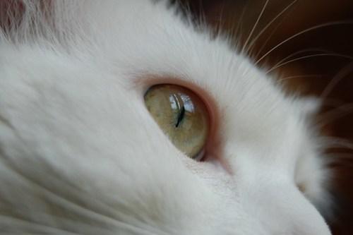 Through the eyes of Neo