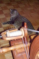 Max & wheel