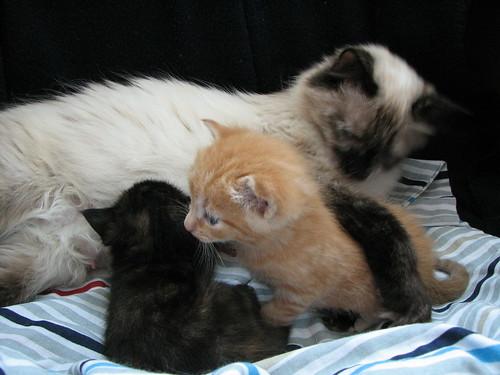 Blu's Kittens 24