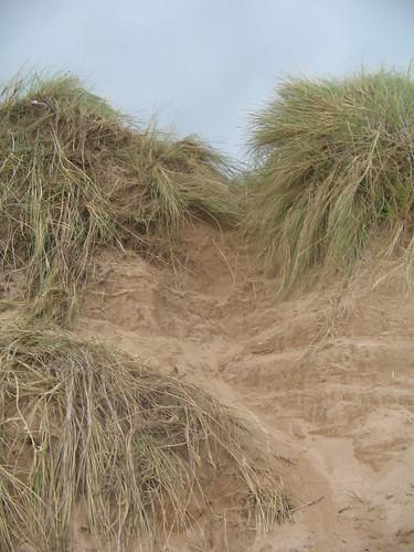 typiska skotska dunes