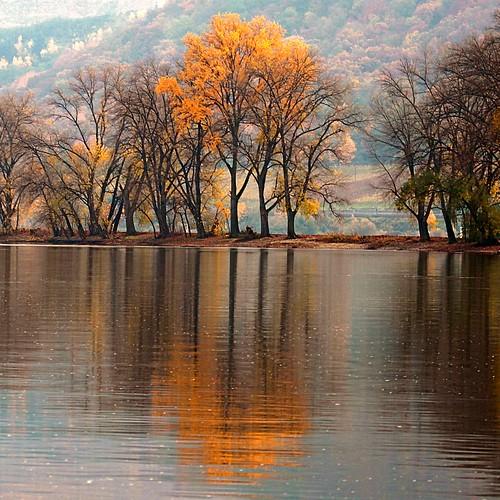 wood autumn tree love nature germany deutschland ngc... (Photo: Mister-Mastro on Flickr)