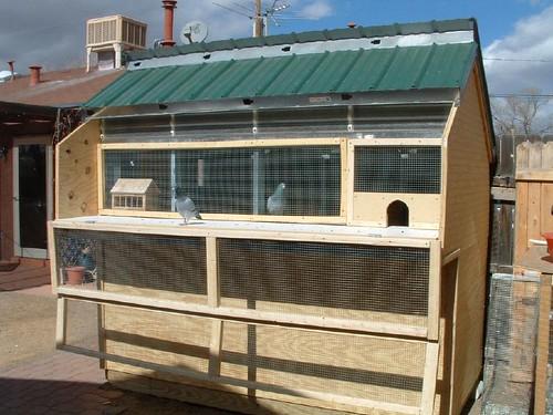 Pigeon loft design ideas for Pigeon coop ideas
