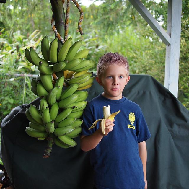 Banana Taste Test #3